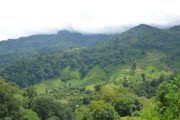 Boquete, The Highlands of Panama-704