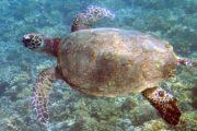 Caribbean Reef & Beach Exploration-484