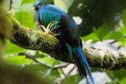 Los Quetzales Trail in Friendship International Park-670