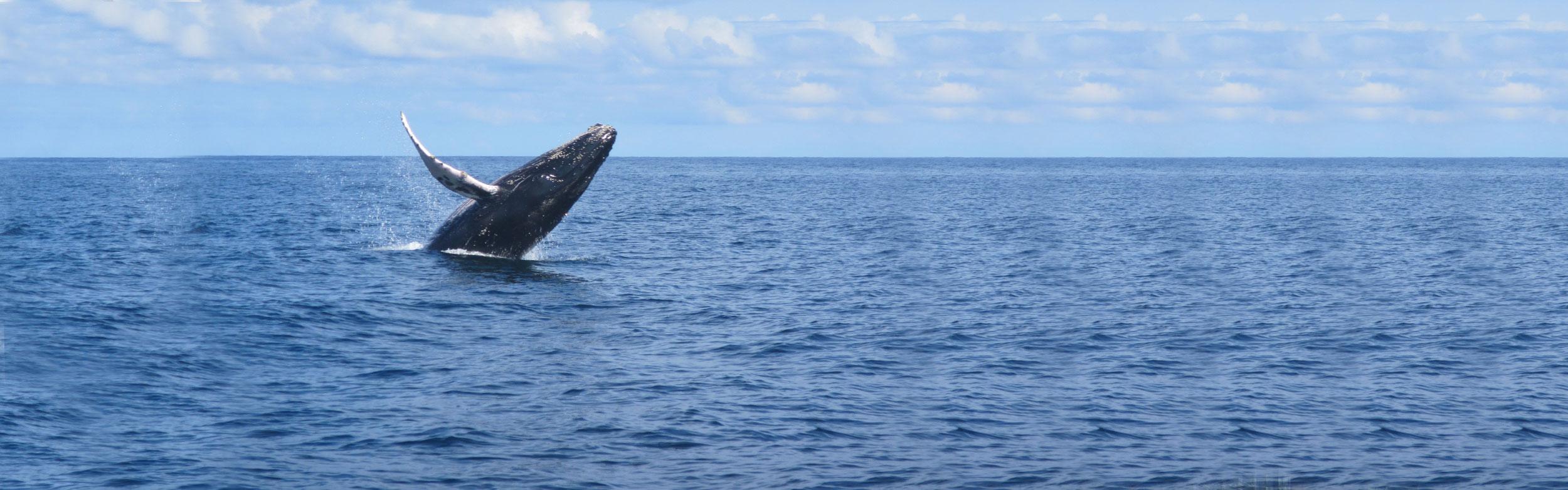Panama Bay Whale Watching