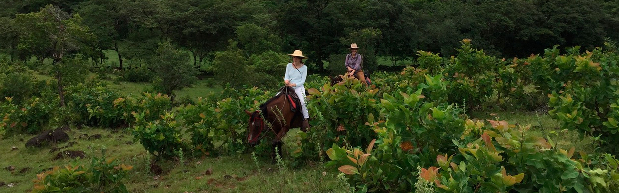 Horseback Riding Experience: Ride and Discover Panamá