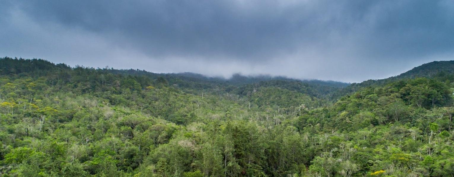 Birding in Cerro Azul